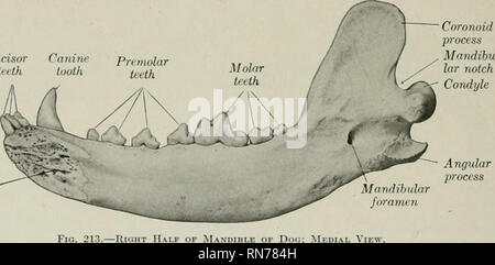 The Anatomy Of The Domestic Animals Veterinary Anatomy 194
