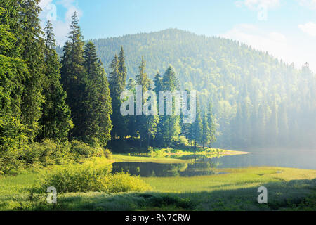 amazing landscape with mountain lake among forest. beautiful summer scenery in the morning. coniferous trees on the grassy shore. hazy and sunny weath - Stock Photo