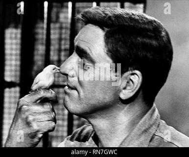 LANCASTER,BIRD, THE BIRDMAN OF ALCATRAZ, 1962 - Stock Photo