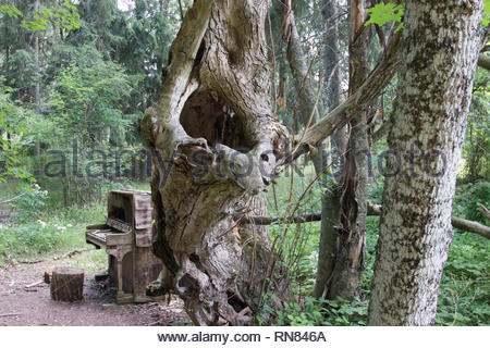 Curios formed tree like a tuba and an old piano in the wood - Stock Photo