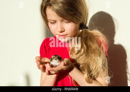 Girl child 7 years old blonde with long wavy hair holds in the hands of her beloved pet - hamster. A hamster looks at the camera, background home ligh - Stock Photo
