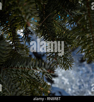 Frozen rain drop close-up hanging from a fir branch. Snow in the background out of focus - Stock Photo