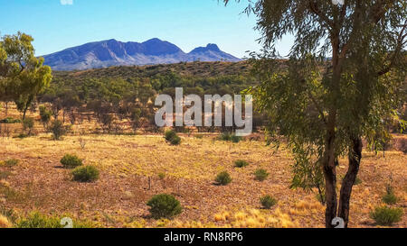 a morning shot of mount sonder and gum trees in the nt - Stock Photo