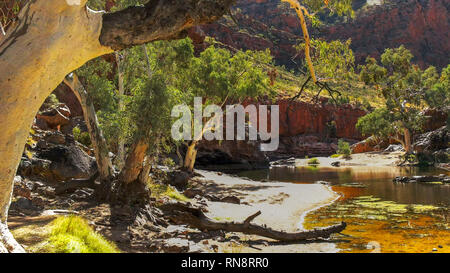 a ghost gum at the waterhole at ormiston gorge in the west macdonnell ranges - Stock Photo