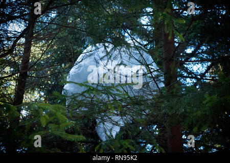 Big snow ball in the fir tree. Forest with pine trees. Early spring - Stock Photo