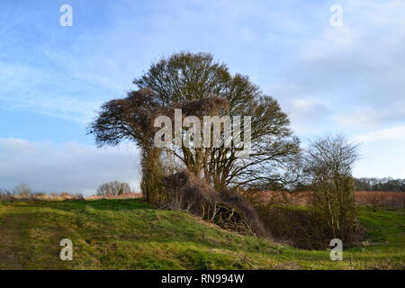 Trees growing in a World War 2 bomb crater at Romney Street, near Shoreham, Kent on a unseasonally warm day in February 2019 - Stock Photo