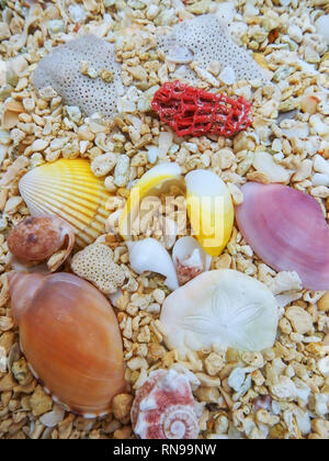 Close-up of shells on the beach - Stock Photo