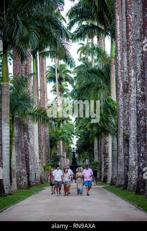 Family walking past an avenue of tall royal palm trees on an overcast summer day in the botanical garden of Rio de Janeiro - Stock Photo