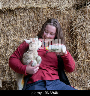 Burscough, Lancashire, UK. 18th February, 2019. Lambing time at the Animal Farm as Emily a zoology student and farm assistant, helps with the care of lambs that have been orphaned, feeding the animals which would otherwise die. Credit: MediaWorldImages/AlamyLiveNews. - Stock Photo