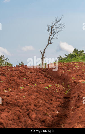 Lone leafless tree standing at the top of a plowed farm hill with a narrow path in the dirt leading up to it. - Stock Photo