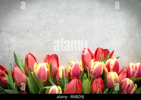 Bunch of tulip, bouquet of flowers for mothers day card. Spring tulips on bright background. - Stock Photo