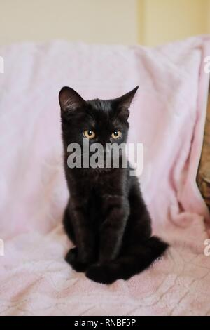 A portrait of the black cat. The cat is preparing to jump. - Stock Photo