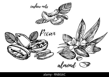 Almonds, Pecan and cashew nuts sketch illustrations. Hand drawn illustrations isolated on white background. - Stock Photo