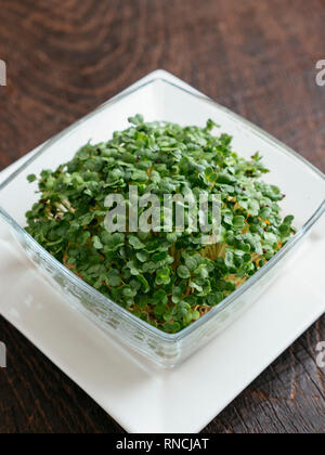 Broccoli Raab (Brassica rapa var. cymosa) sprouts.