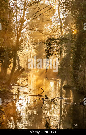 A cold, frosty and sunny start to the day with lovely golden light in Abington Park Northampton. - Stock Photo
