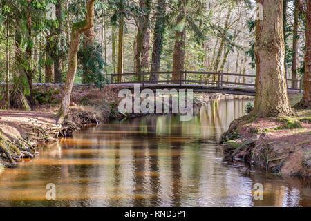 New Forest, Blackwater Bridge, Rhinefield Ornamental Drive, Brockenhurst, UK. - Stock Photo