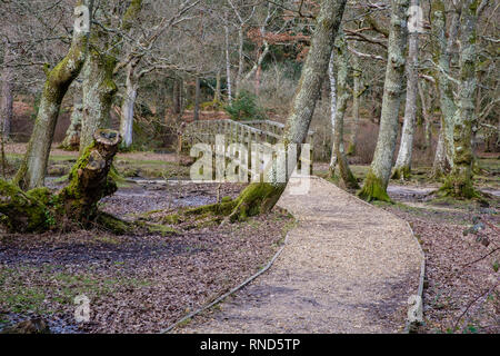 New Forest, Puttles Bridge, Ober Water, Rhinefield Walk, Brockenhurst, UK. - Stock Photo