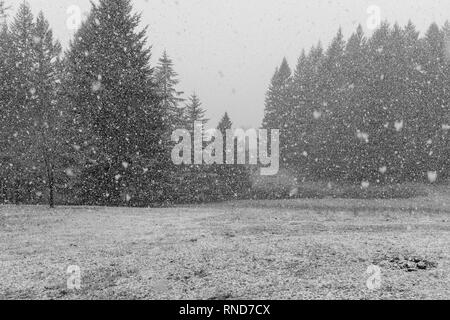 Snow falling on a large garden,large snow flakes visible in, the foreground, shot in black and white - Stock Photo