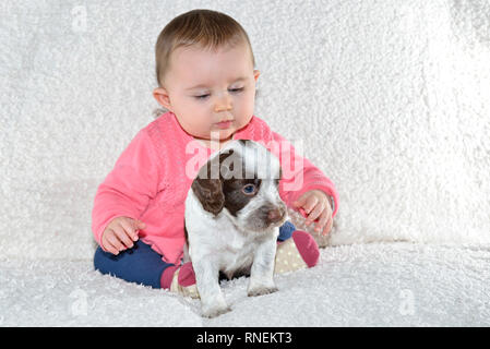7 month baby girl with young sprocker spaniel puppy dog - Stock Photo