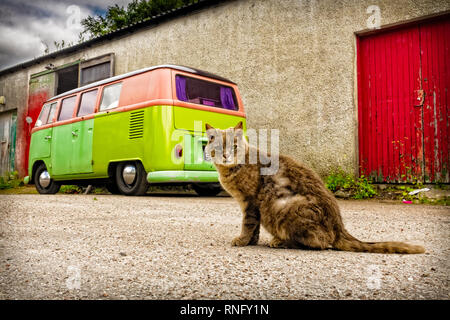 Domestic cat sitting in road beside garage workshop with multi coloured vw campervan parked behind - Stock Photo