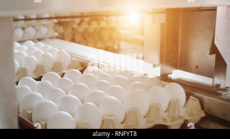 Automatic egg sorting process at the poultry farm, sunset - Stock Photo