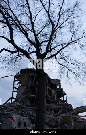An old tree survives demolition of an old hospital next to it to make way for a new university to be built. - Stock Photo