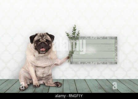 cute smiling pug puppy dog sitting down on old green wooden floor, holding blank sign and eucalyptus twigs and branches, in front of wall with morocca - Stock Photo
