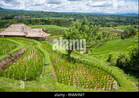 Jatiluwih Rice Terraces, Bali. Beautiful landscape, fresh green rice paddies with cloudy sky background - Stock Photo