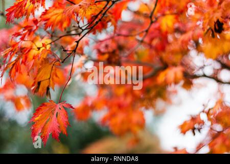 A colorful walk in autumn time - Planten un Blomen, Hamburg - Stock Photo