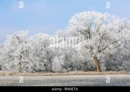Winter in the Elbaue, deciduous trees covered with hoar frost, Middle Elbe Biosphere Reserve, Saxony-Anhalt, Germany - Stock Photo