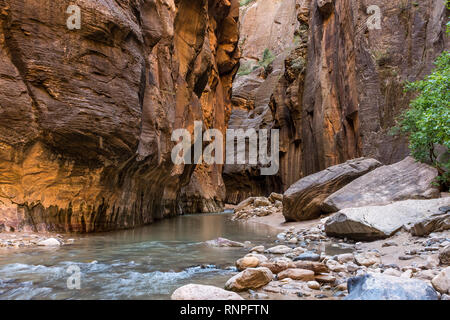 The majestic Zion National Park, the Virgin River flowing through The Narrows with nobody in the picture - Stock Photo