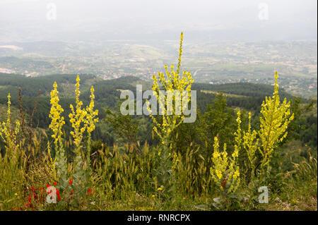 Vodno Mountain, Skopje, Macedonia - Stock Photo
