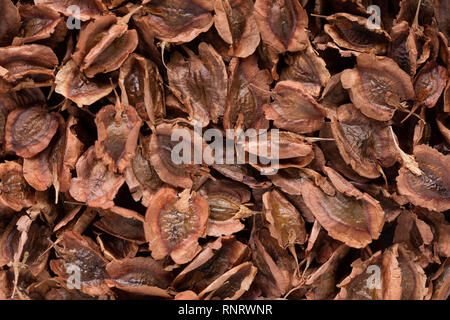 High quality seeds of rhubarb, in a texture form for your beautiful garden. Can be used by seed producers. - Stock Photo