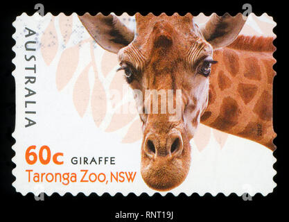 AUSTRALIA - CIRCA 2012: A stamp printed in AUSTRALIA shows the Giraffe from Taronga Zoo,WA, series, circa 2012. - Stock Photo