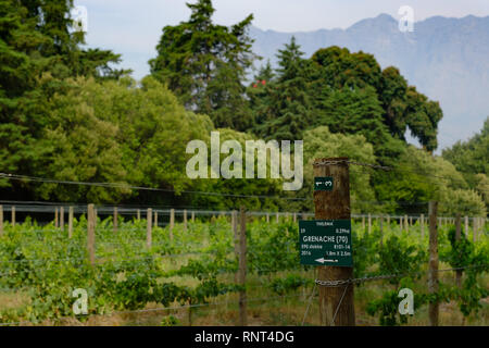 The scenery around Thelema, a vineyard in Stellenbosch, near Cape Town, South Africa - Stock Photo