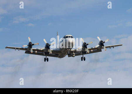 A Lockheed P-3C Orion maritime patrol aircraft with Air Development Squadron 51 of the Japanese Self-Defence Force (JSDF) flying out of Naval Air Faci - Stock Photo