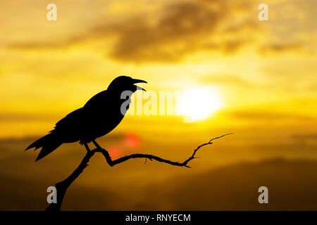 sunset nature crows birds sitting on the tree - Stock Photo