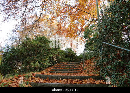 old stairs full of autumn leaves - Stock Photo