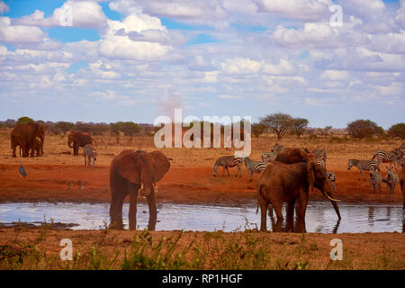 View of a family of elephants and zebras. Water pond in the Tsavo National Park in Kenya, Africa. Blue sky with clouds and red sand.