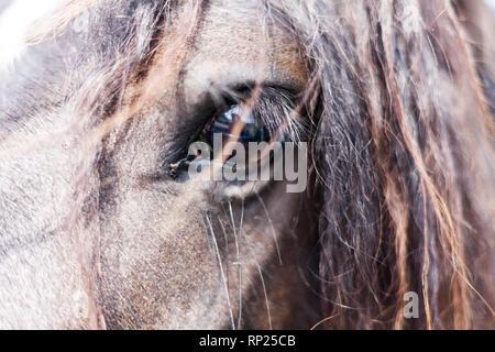Closeup image of eye of the horse. Domestic animal concept. Macro image of horses eye - Stock Photo