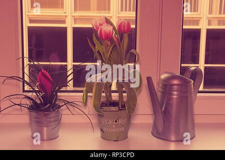 Flowers in flower pots and watering can on window ledge. Retro effect. - Stock Photo
