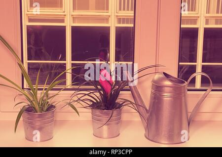 Flowers in flower pots and watering can on window ledge. Tillandsia flower. Retro effect. - Stock Photo