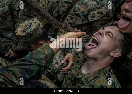 A U.S. drink the blood of a king cobra during jungle survival training as part of Cobra Gold 19 at the Ban Chan Krem training area February 14, 2019 in Chantaklem, Thailand. Cobra Gold is the largest annual joint military cooperation exercise in the Indo-Pacific region. - Stock Photo