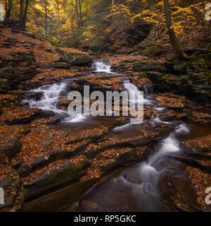 Autumn leaves carpet Ricketts Glen State Park, Pennsylvania - Stock Photo