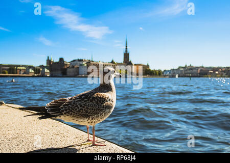 Pigeon at waterfront at Stockholm Stadshus / town hall with view of Stockholm skyline on Gamla Stan during blue summer day (Stockholm, Sweden, Europe) - Stock Photo