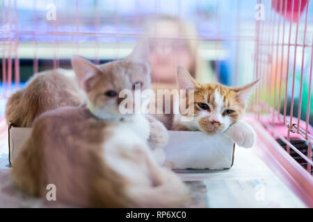 Portrait of sad orange ginger and white kitten cats looking from cage behind bars waiting for adoption with siblings - Stock Photo
