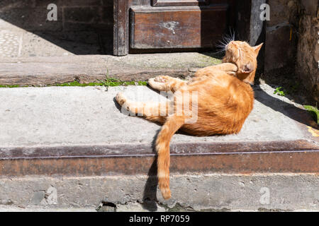 Funny stray orange ginger one cat grooming scratching ears sitting on sidewalk street near building house in Lviv, Ukraine - Stock Photo