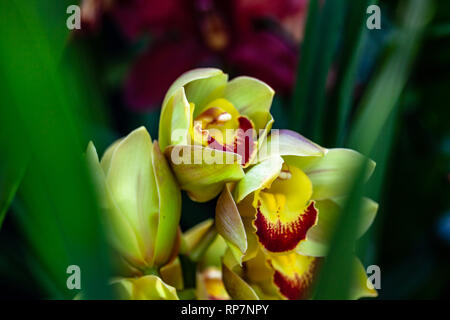 ORCHIDS OF MANY COLORS FLOWERS - Stock Photo