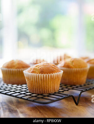 Undecorated cupcakes cooling on cake rack, homemade - Stock Photo