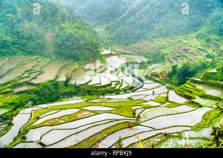 Banaue Rice Terraces in the rain. UNESCO world heritage in the Philippines - Stock Photo